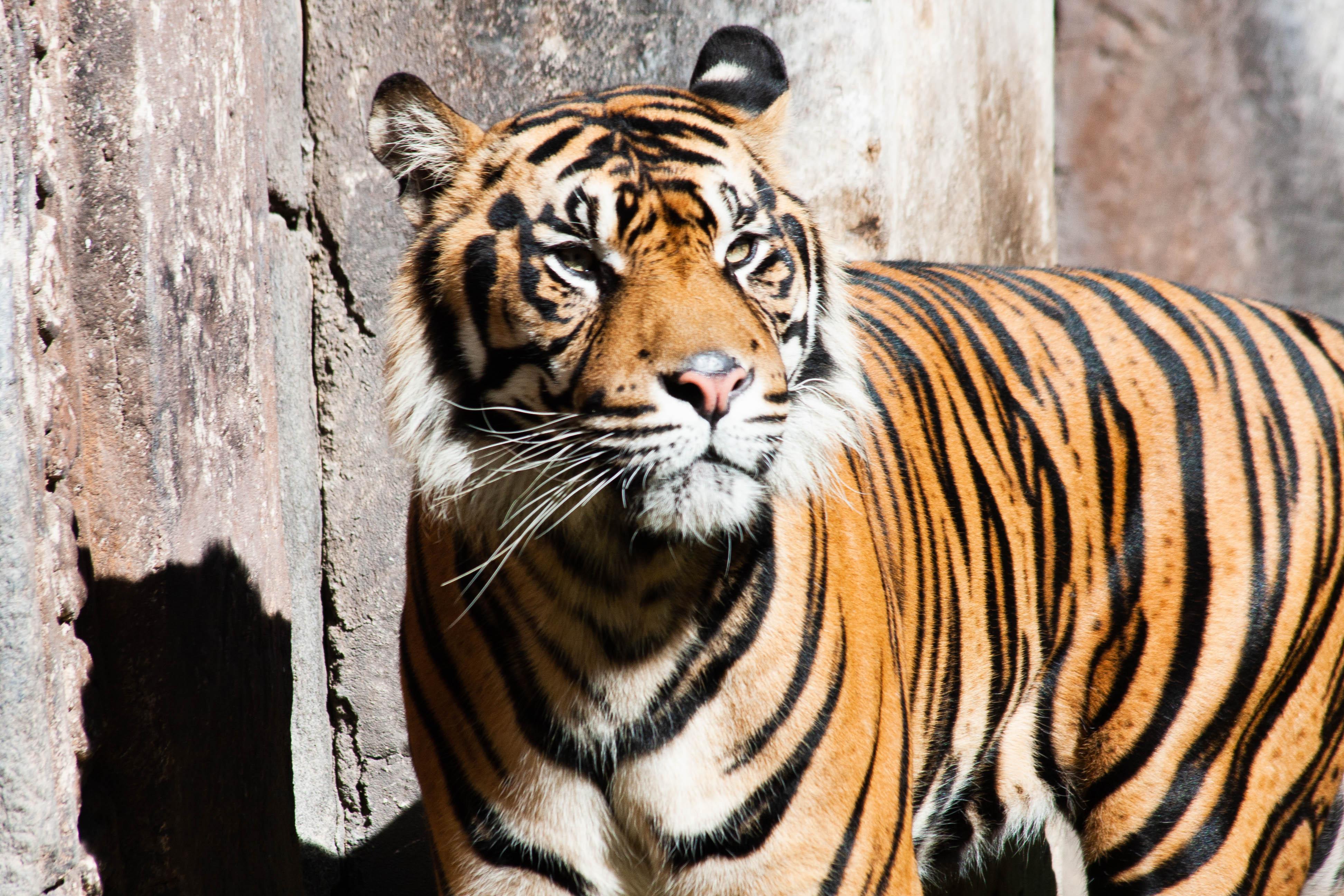 Fuengirola Zoo 2018