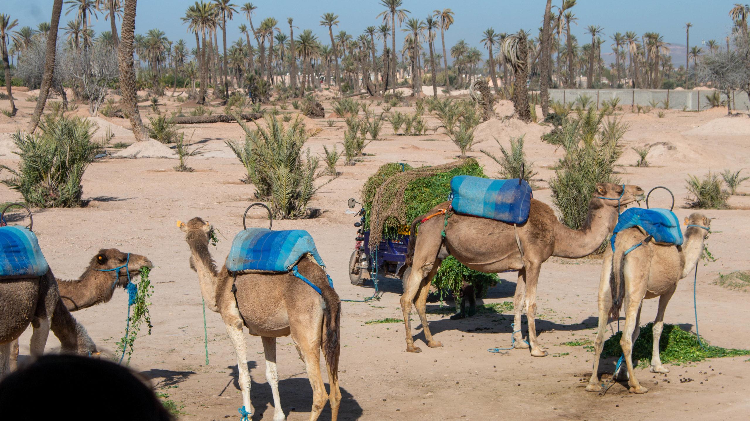 Feb 2020 Marrakech